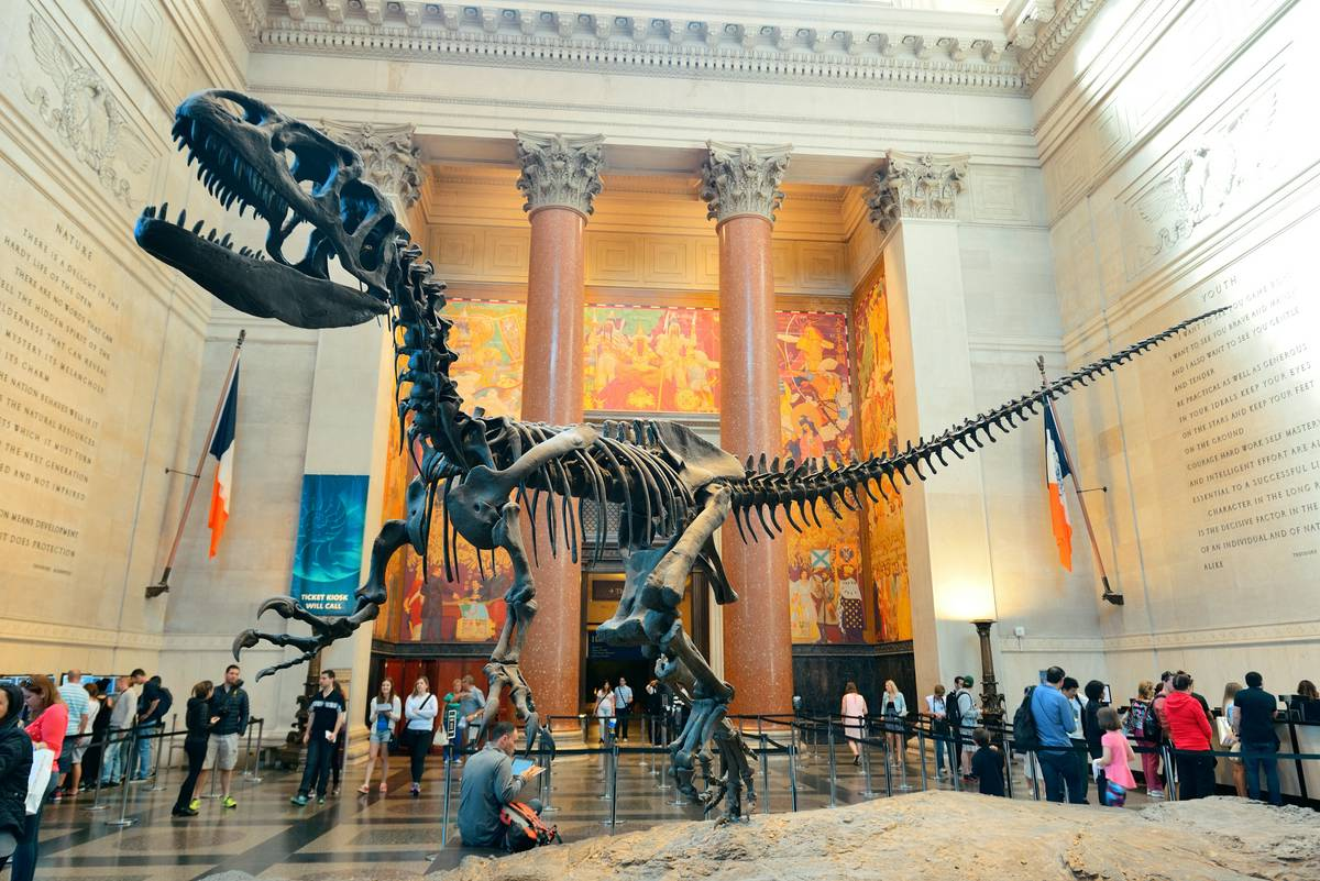 my visit to the national museum of natural history